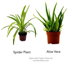 Spider Plant Aloe Vera Plant Test Remove Filter Formaldehyde