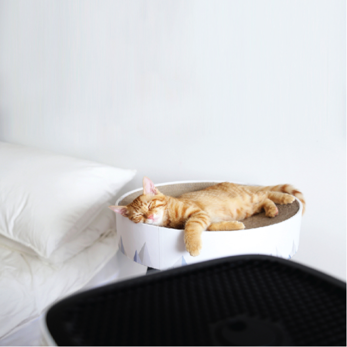Sqair quiet air purifier for pets and cats