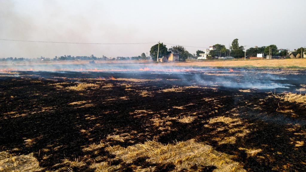 Crop burning pollution in Delhi, India.